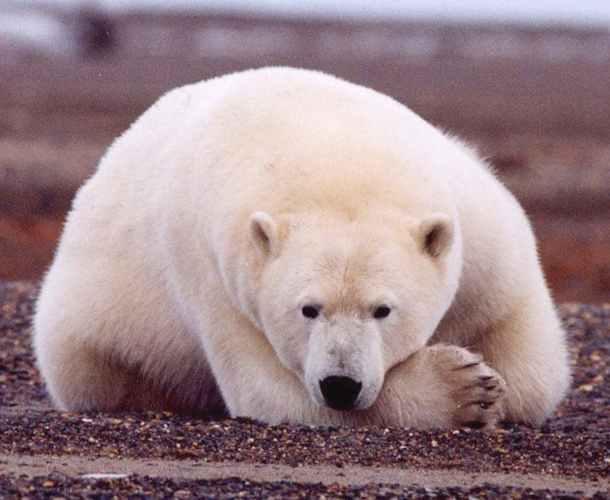 Дело о подрыве медведицы на …