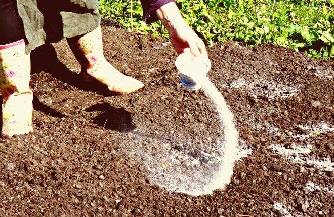 Кладу каждую осень горсти соды по всему огороду, отвечаю для чего.