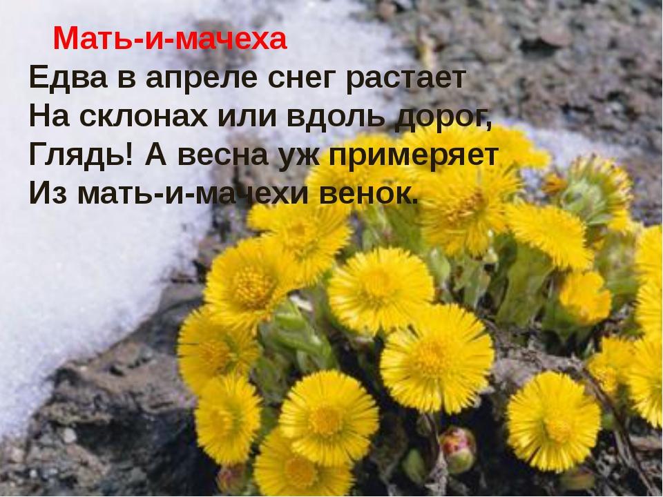 Мать-и-мачеха и Достоевский.