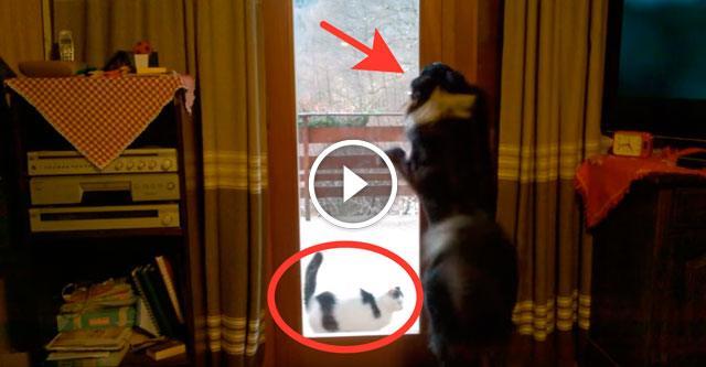 Собака, увидев, что кот мёрзнет на улице, впустила его в дом