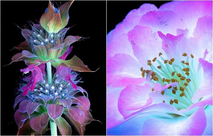 10  фотографий цветов, освещённых ультрафиолетом