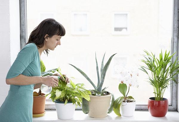 Как выбрать оптимальную схему полива комнатных растений?