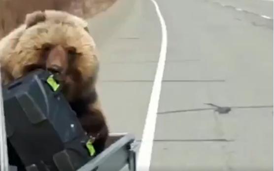 """""""Ну бахни ты, чё ты! Утащит ящик!"""": На Камчатке медведь стащил всю еду у охотников"""