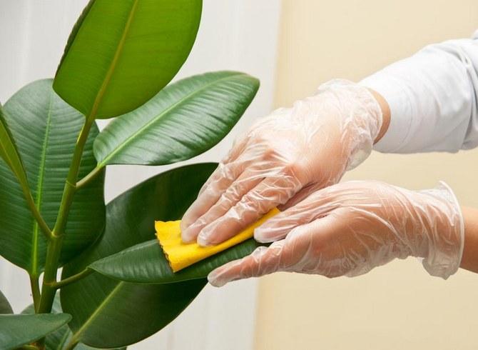 Очистка листьев растений от пыли и грязи