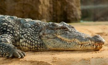Учредитель патриотической организации прятал арсенал оружия и крокодила