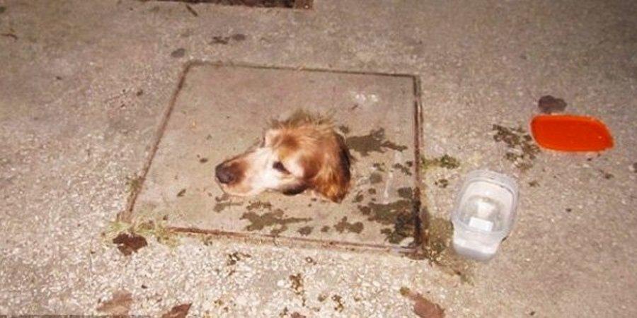 В Англии школьники спасали застрявшую собаку