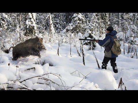 Охота на кабана. Лучшая десятка