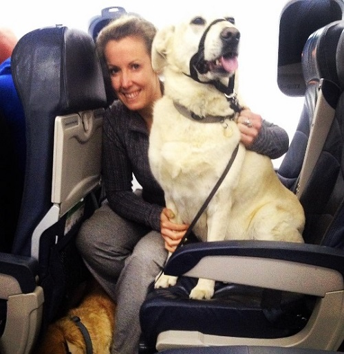 Против правил — авиакомпания разрешила пассажирам брать животных в салон самолета