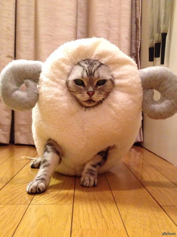 Какая котосволочь вам подойдет по характеру