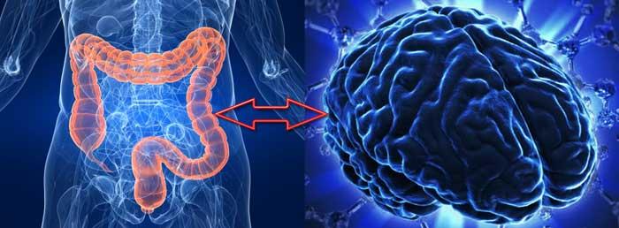 Низший разум: Как кишечные бактерии управляют нашим мозгом