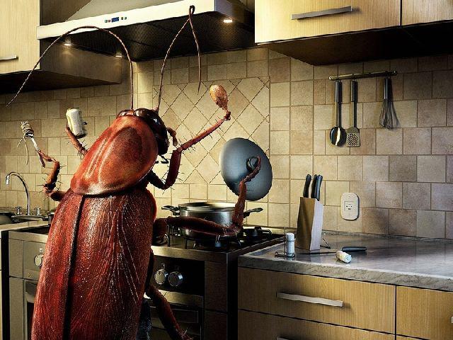 Вас замучили пауки, тараканы и другие насекомые в доме? Мы покажем Вам как избавиться от них раз и навсегда!