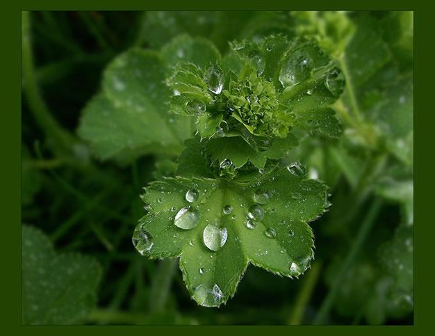 Травы, которые лечат почти все острые состояния