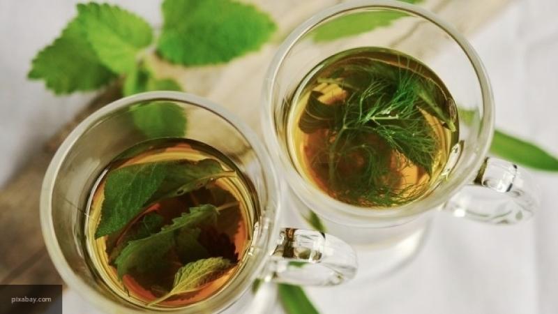 Доктор Мясников рассказал о пользе зеленого чая в борьбе с раковыми опухолями