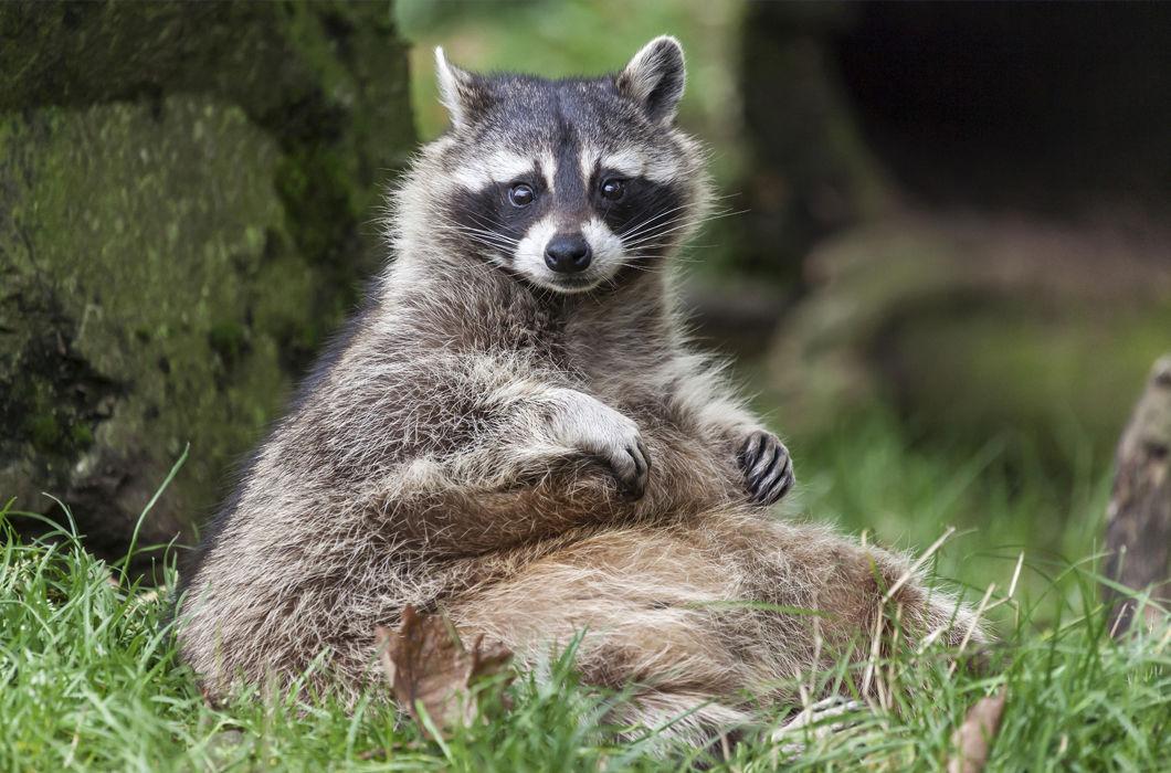 Симпатичные толстячки из мира животных