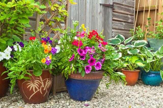 Совет читателя: как и зачем вывозить комнатные растения на свежий воздух?