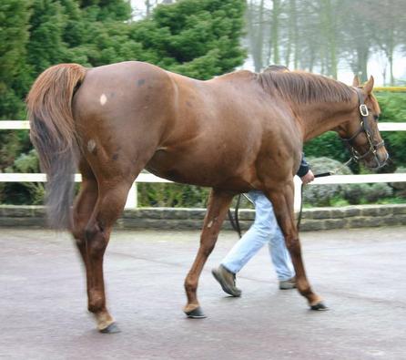 фото лошади рыже-чубарой крапчатой масти