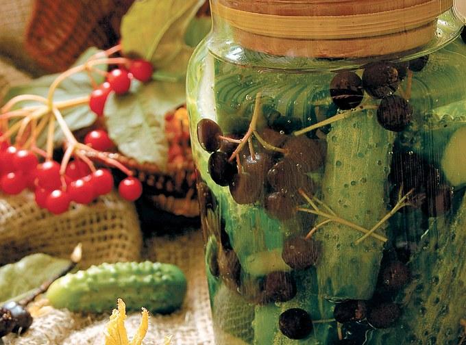 Соленые огурцы с гроздями рябины