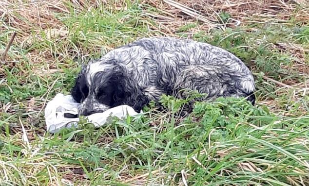 Мужчина спас собаку, которая держала пакет в зубах...