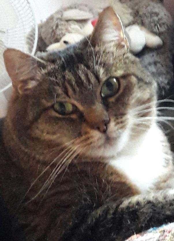 Наша кошка Муся. Очень интер…