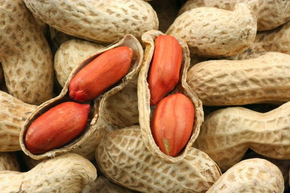 Важные советы для новичков и не только, по сбору и хранению арахиса