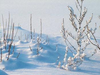 На Ямале стоят аномальные морозы, но 80-градусных не ожидается