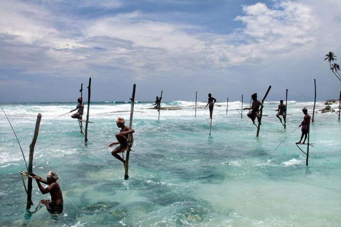 Рыбаки Анхагамы ловят рыбу на специальных палках помостах.