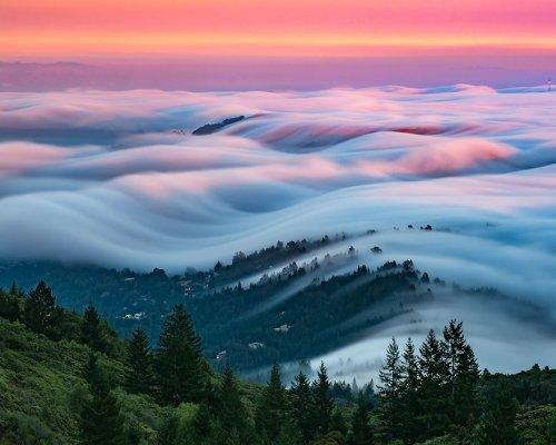 Туманы над Сан-Франциско в фотографиях Ника Стейнберга (10 фото)