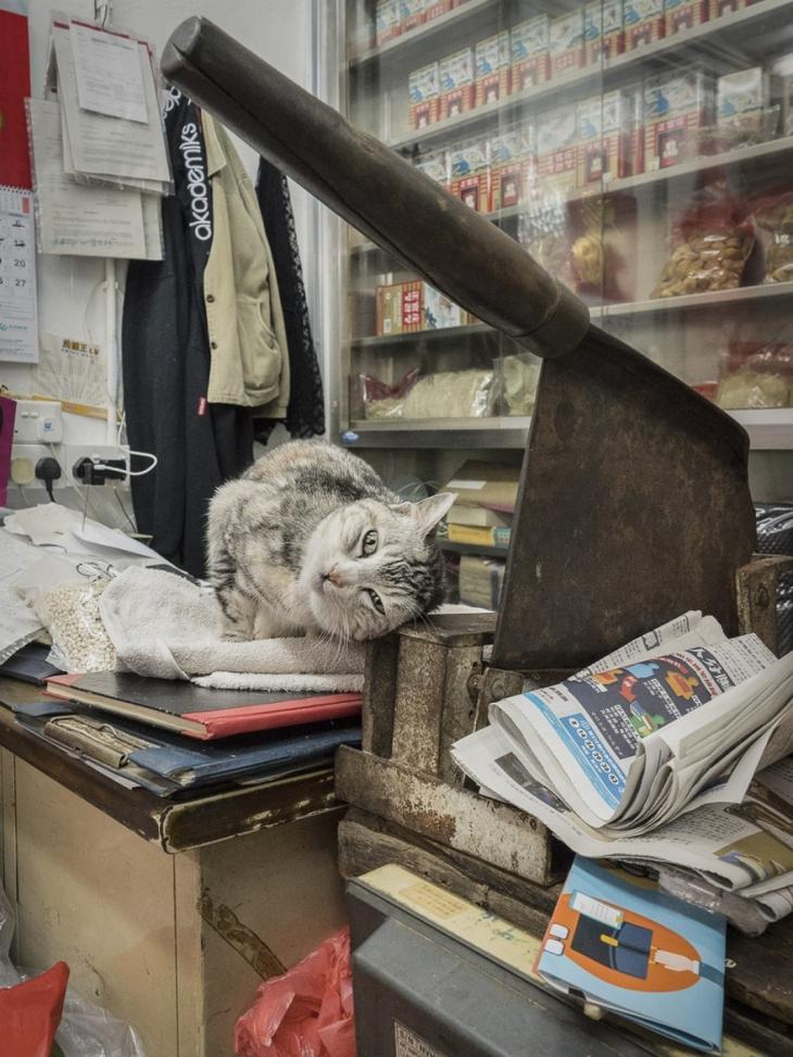 Тайная жизнь магазинных котов Гонконга
