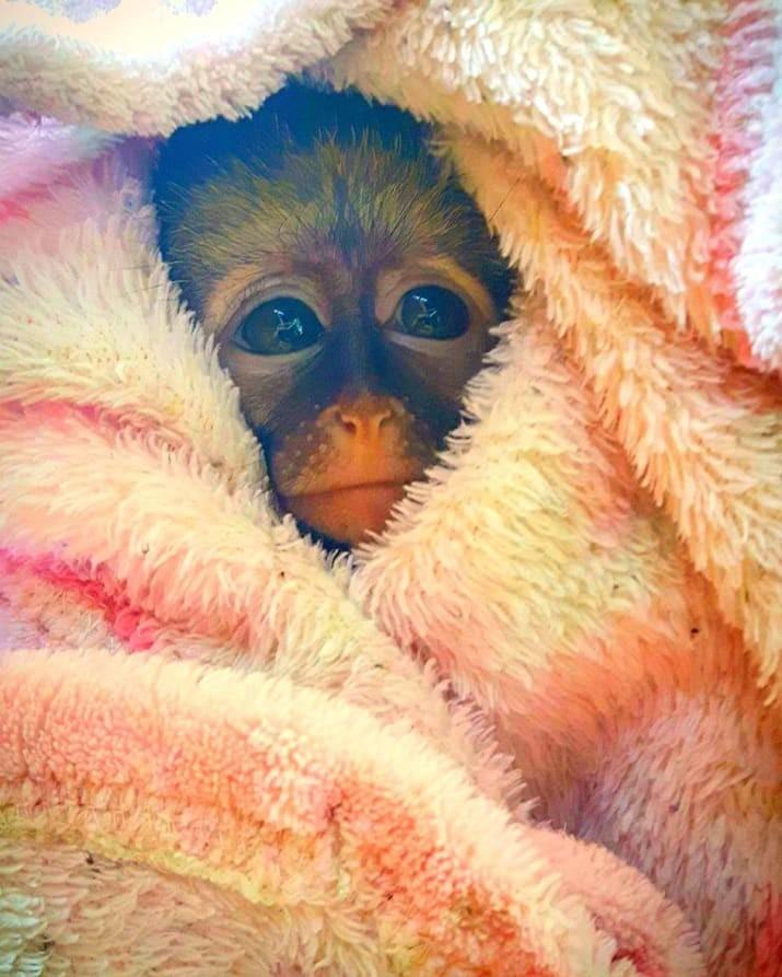 Эти глаза повелевают человеческим разумом.. животные, мило, фото