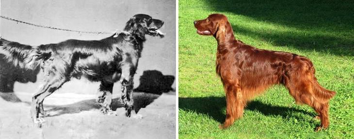 Были и стали: эволюция пород собак