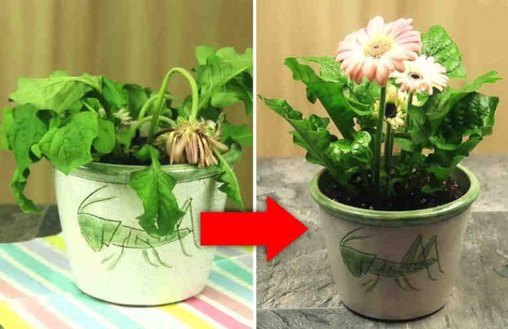 Это удобрение возрождает к жизни растения за считанные дни!