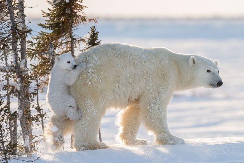 Чудесные снимки дикой природы