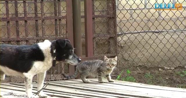 В Литве цепная собака стала другом бездомному котенку