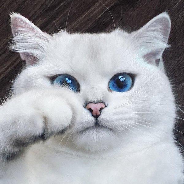 Знакомьтесь, Коби. Кошка с с…