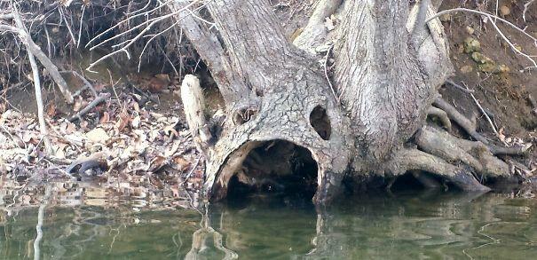 Дерево пьет из озера парейдолия, похоже да не то же, похоже на лицо