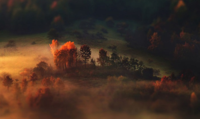 Волшебство и загадка таится в осеннем лесу.
