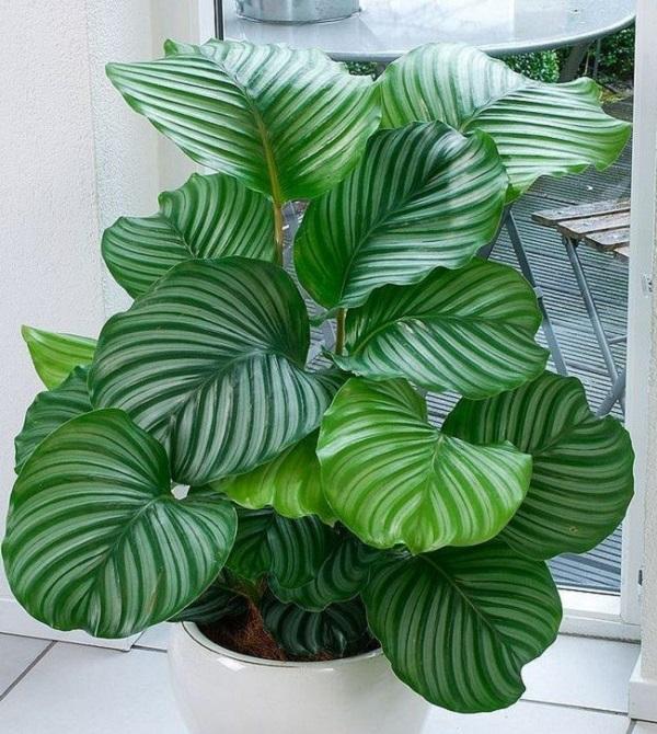Смотрите и Вы узнаете, какие растения могут нести смертельную опасность!
