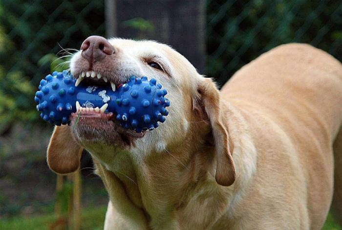 Уход за собачьими зубами.