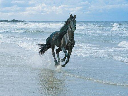 Вороная масть лошадей: фото, описание