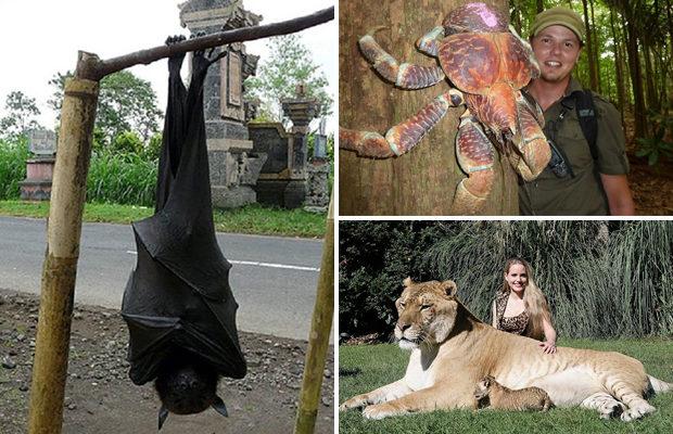 Крупнейшие существа, которые выглядят почти нереально