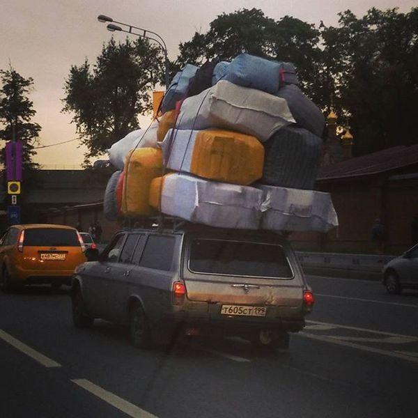 Чего только не встретишь на дорогах: несколько уморительных фото