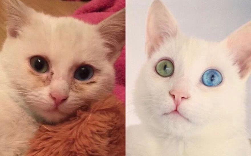Кот доказывает, что в жизни можно преодолеть любые трудности.