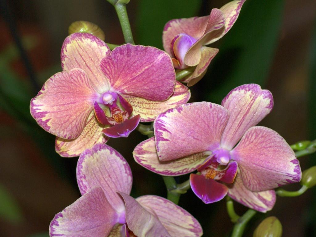 Чтобы орхидеи радовали буйным цветением, следуйте этому простому графику подкормки