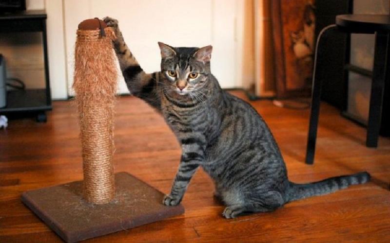 Этот трюк больше не позволит вашей любимой кошке портить обои или мебель в доме. И больше ни каких царапин