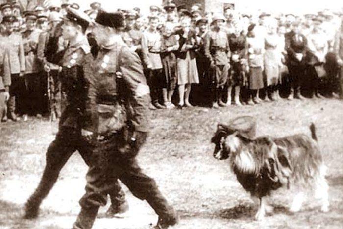 История снимка: почему в параде по случаю освобождения Минска от фашистов рядом с партизанами маршировала коза?