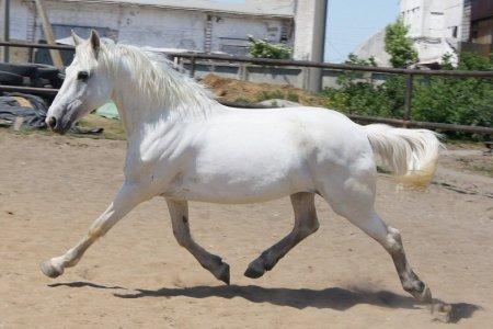 Фото лошади светло-серой масти