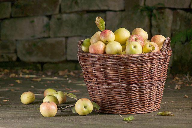 Мочить и сушить. Как сохранить в яблоках наибольшее количество витаминов