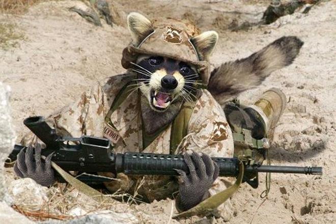 Енот убил полицейского в Тюмени. Мгновенная карма охотника!