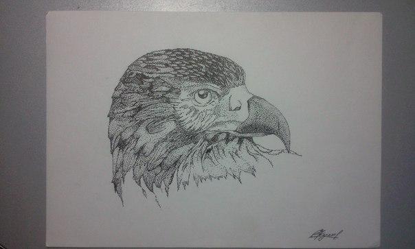 Голова птицы