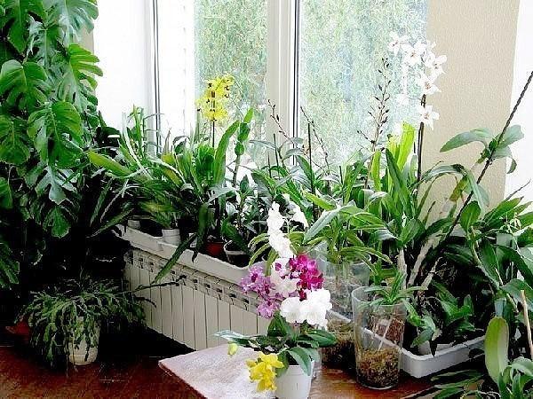 Хотите роскошный цветник в квартире ?